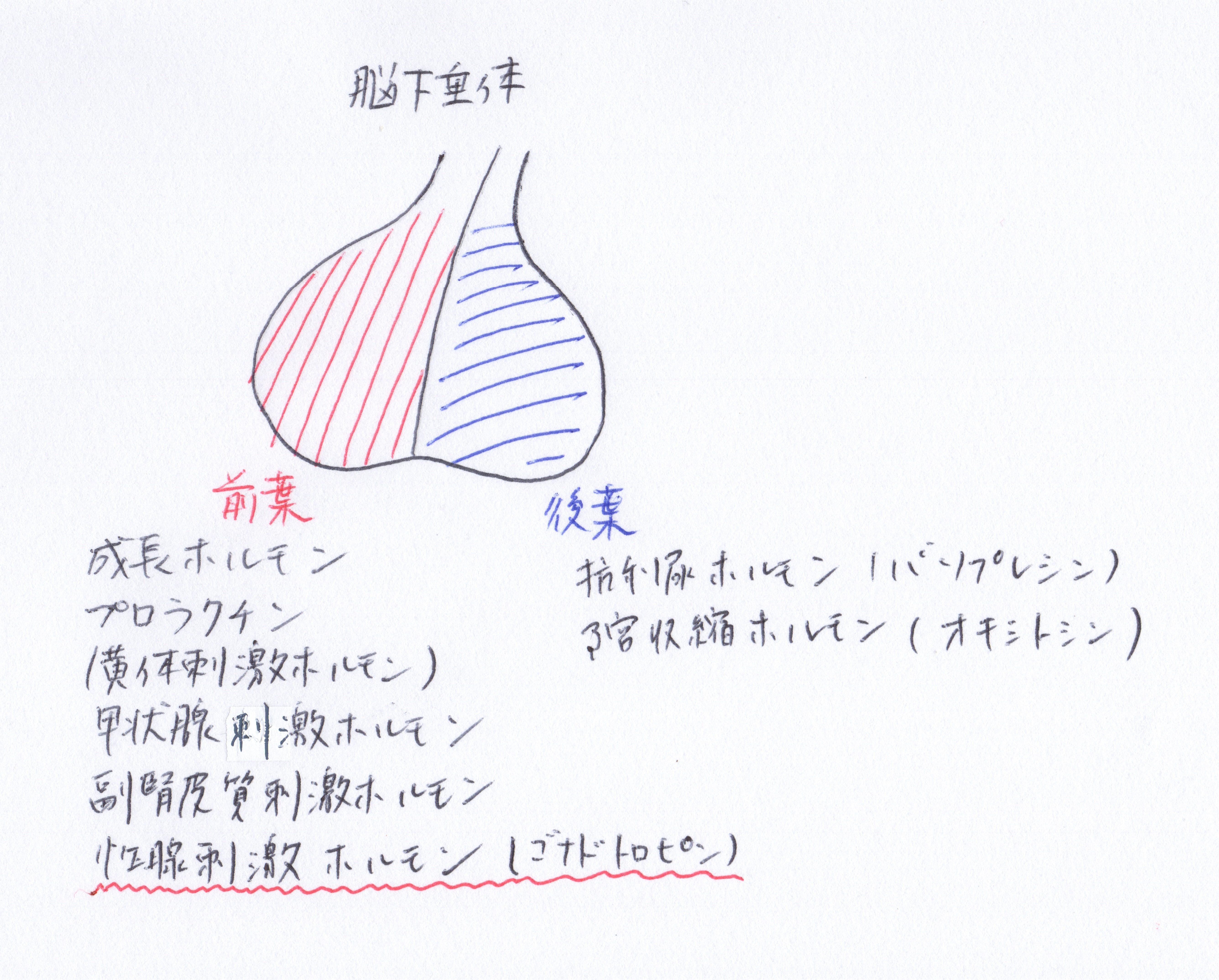 熊本市-月経前症候群-整体