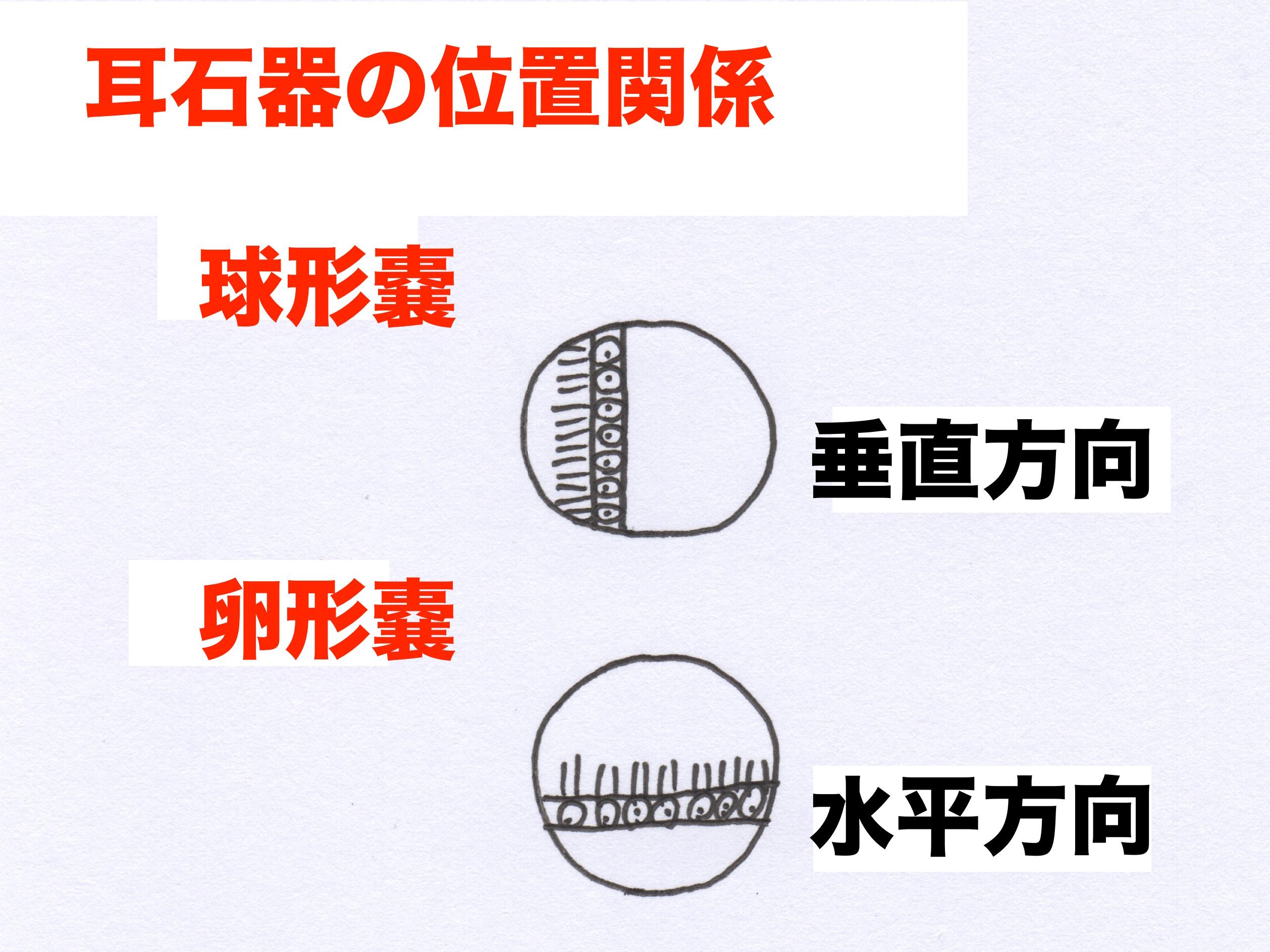 熊本市-良性発作性頭位めまい症