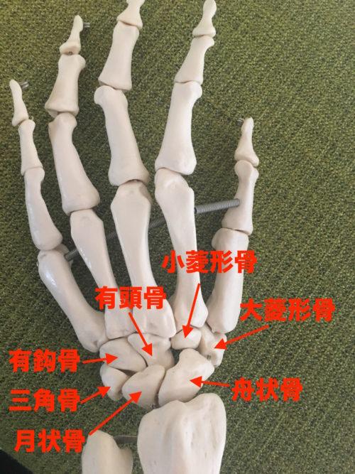 舟状骨骨折-解剖学的嗅ぎタバコ入れ